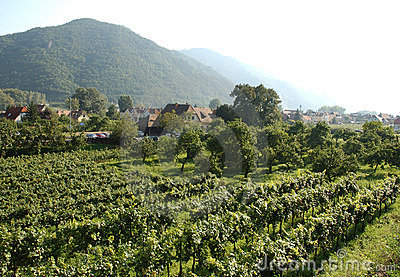 Austria   Wachau