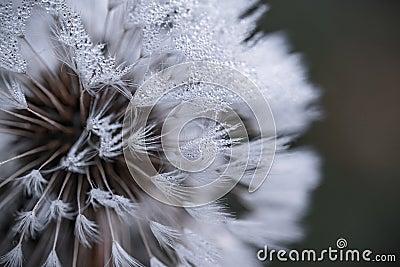 Auto Focus Photography Of White Flower Free Public Domain Cc0 Image