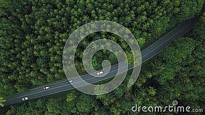 Auto's die zich door weg in bos in Duitsland bewegen Hoogste mening stock footage