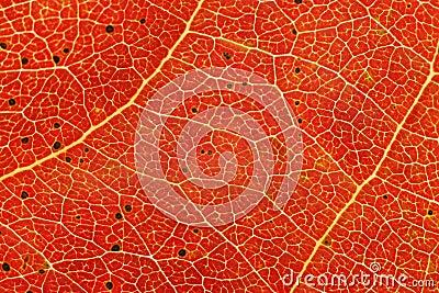 Autum leaf closeup