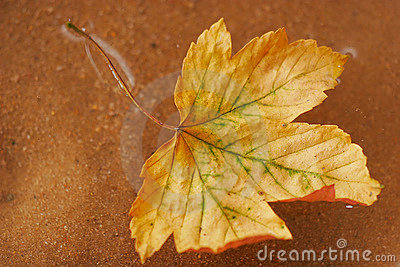Autum leaves floating in the water