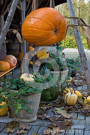 Autum Pumpkin decoration