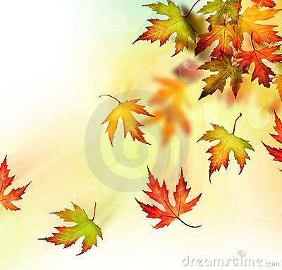 Free Autumn Royalty Free Stock Images - 10617919