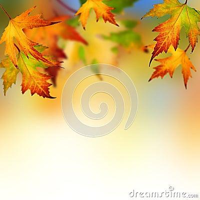 Free Autumn Royalty Free Stock Photos - 10617938