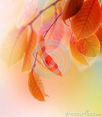 Free Autumn Royalty Free Stock Photo - 11373925