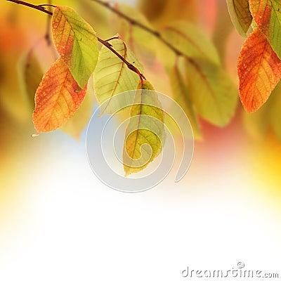 Free Autumn Royalty Free Stock Photo - 11627105