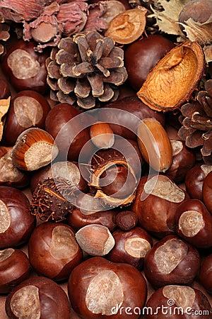 Free Autumn Stock Photo - 14396870