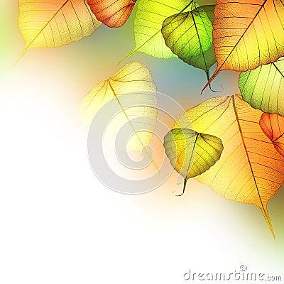 Free Autumn Stock Photography - 15687472