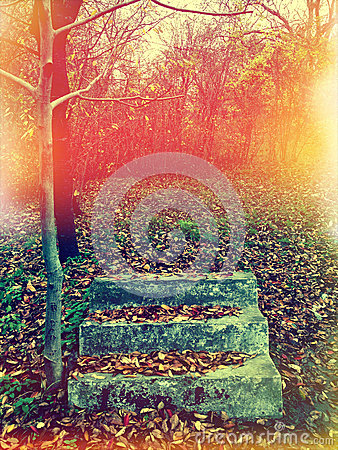 Free Autumn Royalty Free Stock Photo - 28035665