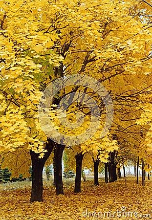 Free Autumn Alley Royalty Free Stock Photos - 662238