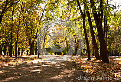 Autumn alley in a park
