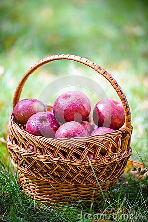 Free Autumn Apples Royalty Free Stock Images - 34343089