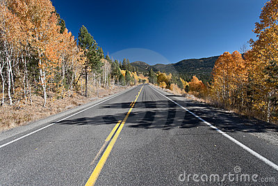 Autumn Aspens and Highway