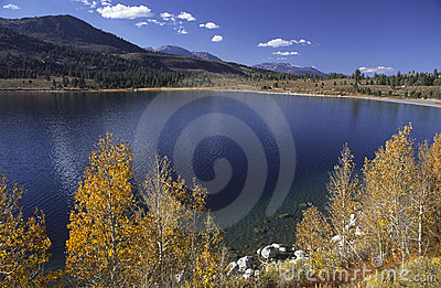 Autumn aspens at June Lake