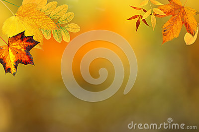 Autumn Backdrop Royalty Free Stock Photo - Image: 25986695