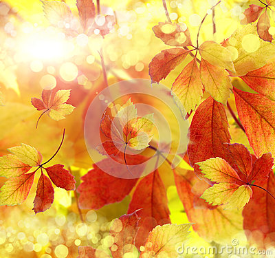 Autumn, background