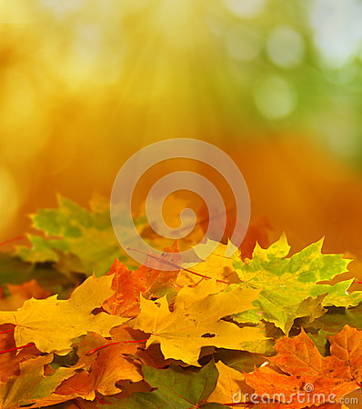 Free Autumn Background Stock Photography - 26398082