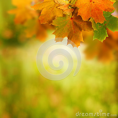 Free Autumn Background Royalty Free Stock Photo - 26753775