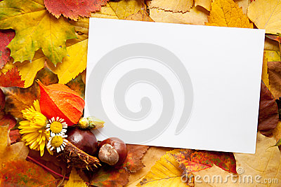 Autumn, background, blank, card, copy, decoration,