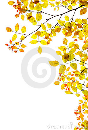 Autumn background, fall leaves natural border