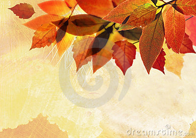 Autumn background leave