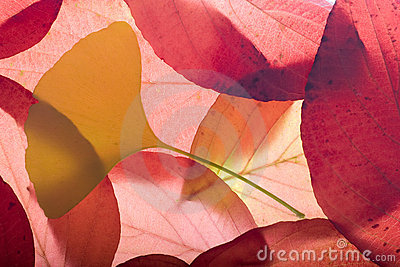 Autumn background from leaves