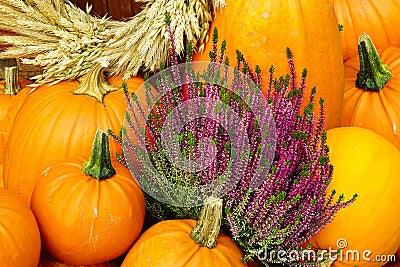 Autumn background.  Pumpkin and Heather