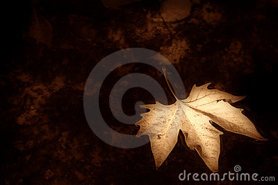 Autumn background sepia
