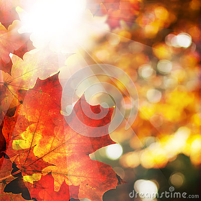 Free Autumn Background With Maple Leaves. Abstract Fall Border Royalty Free Stock Image - 61818816