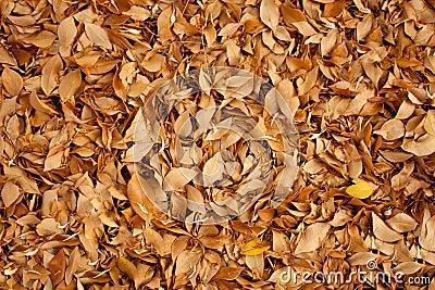 Autumn (backgroung)
