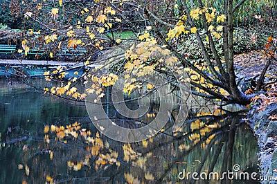 Autumn beacon hill park