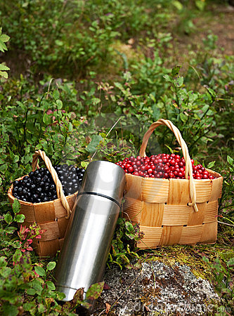 Free Autumn Berries Royalty Free Stock Image - 10728096