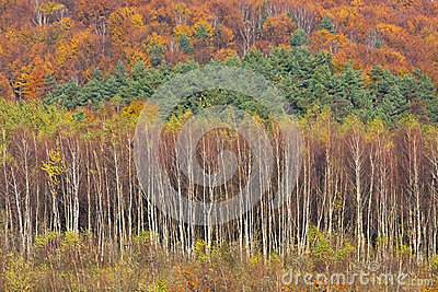 Autumn, Bieszczady mountains