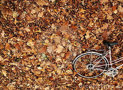 Autumn bike romance