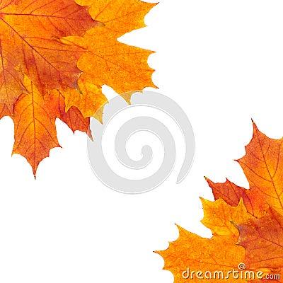 Autumn border of mapple leaves