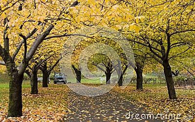 Autumn in botanic garden