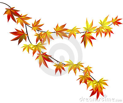 Autumn branch