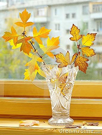 Autumn branch in bowl