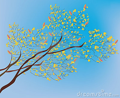 Autumn branch of tree