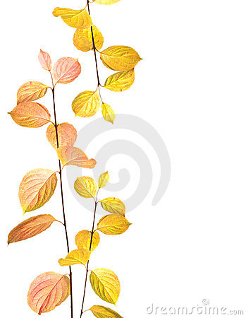 Autumn branches and leaves border