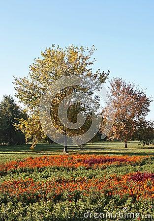 Autumn, bright glade