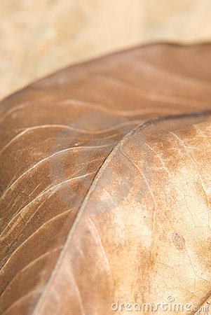 Autumn brown leaf