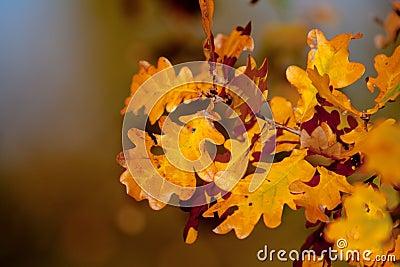 Autumn brunch