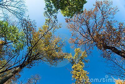 Autumn Canopy Royalty Free Stock Image - Image: 12122216