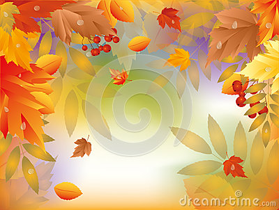 Autumn card with maple leafs