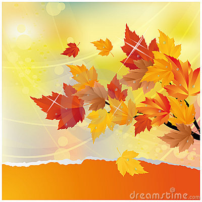 Autumn card with maple tree.
