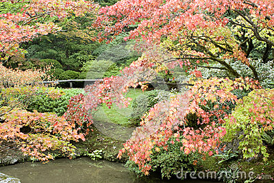 Autumn charm in Japanese garden