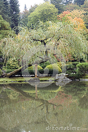 Autumn charm in Japanese garden