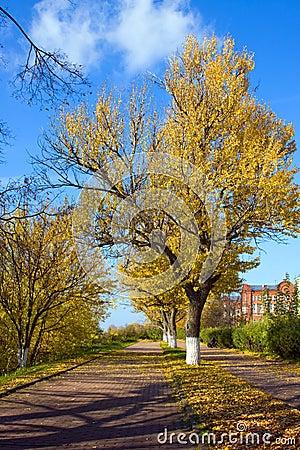 Autumn in city