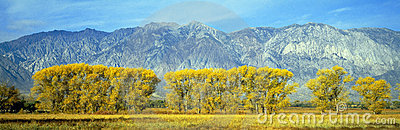 Autumn color along Highway 395,